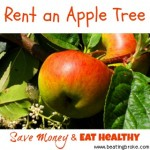 Save Money and Eat Healthy:  Rent an Apple Tree