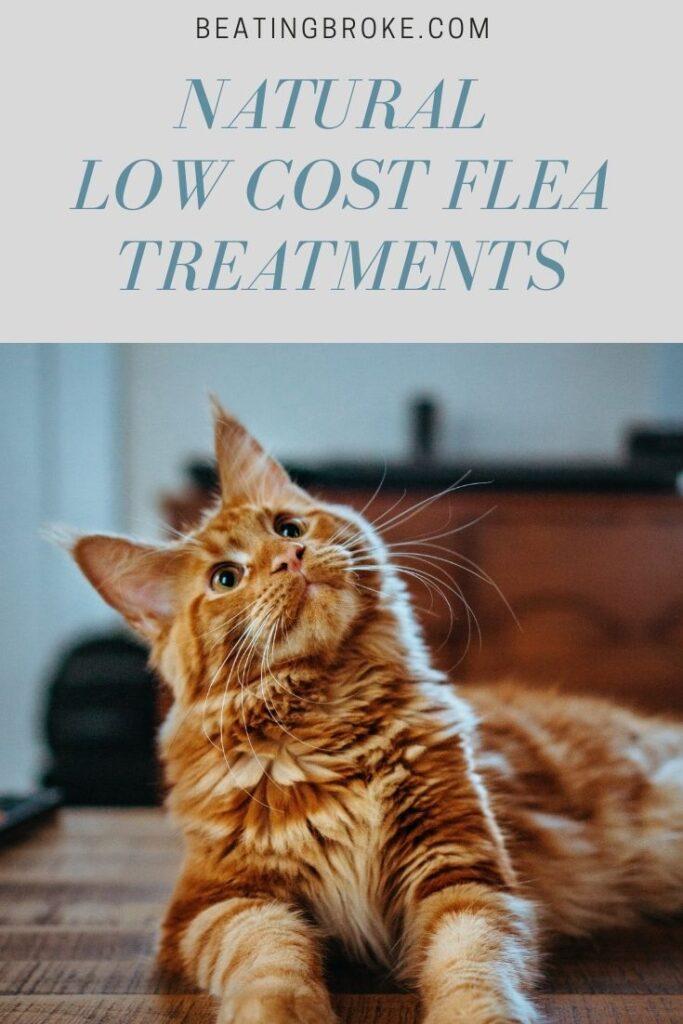 Low Cost Flea Treatments